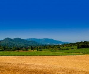 Vendanges en Provence et Langudeoc