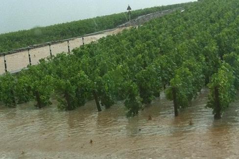 Orage en Bourgogne : le millésime a souffert