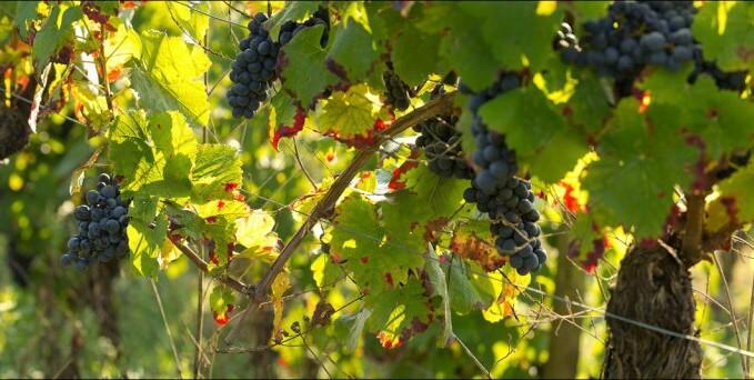 vallon-marcillac-clairvaux-cros-cassagnes-vignes-2011-09-060-1024x342