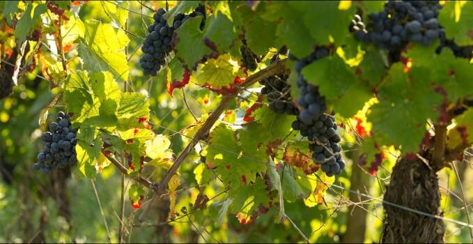 Bordeaux Primeurs 2011 : lancement de la campagne