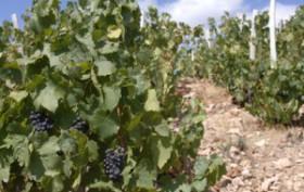 vignes-bourgogne-sd-300x200