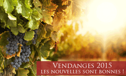 Vendanges 2015 : de belles promesses pour ce millésime !