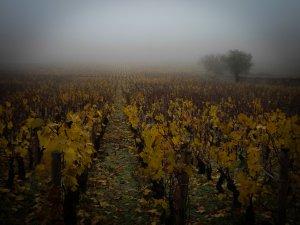 le clos saint jacques dans la brume et ses couleurs automnales
