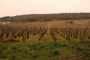 Dégustation en Bourgogne