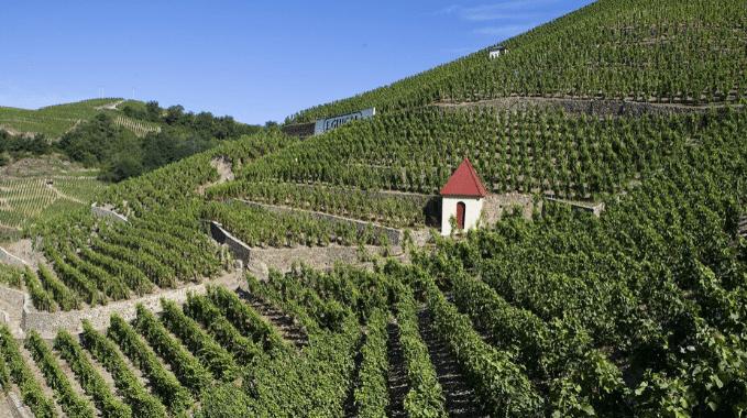 vignoble - cépages - rhône