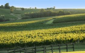Bordeaux vignoble