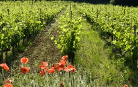 Cavissima s'engage en faveur du mouvement de l'agriculture biodynamique