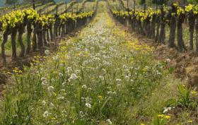 agriculture biodynamique