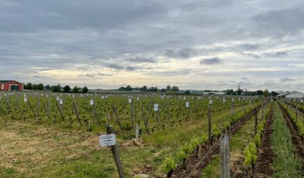 Bordeaux Primeurs 2020