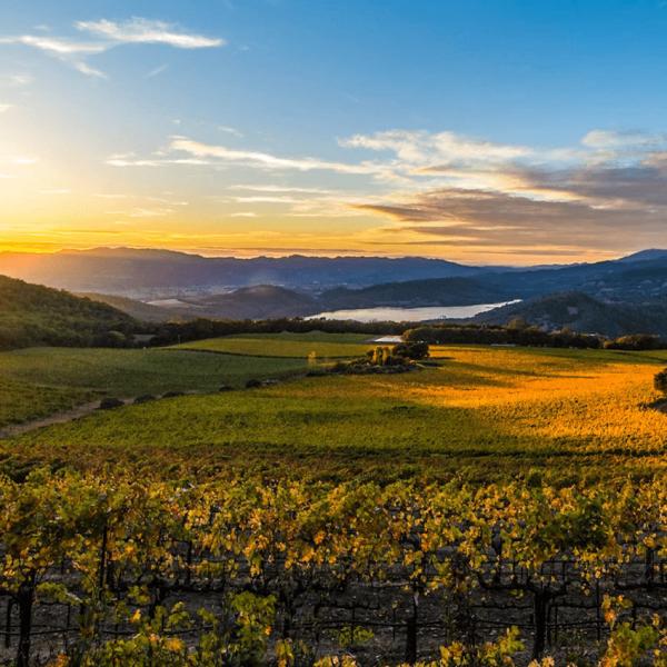 Essor des vins étrangers