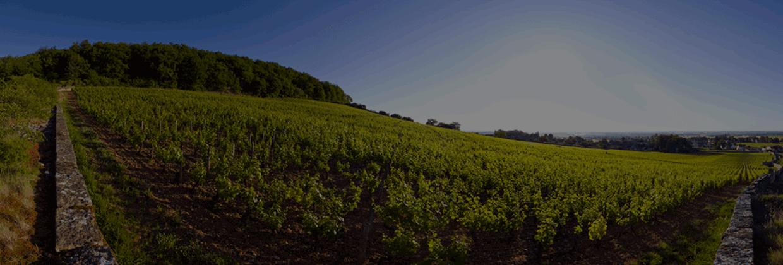 Burghound : le meilleur de la Bourgogne