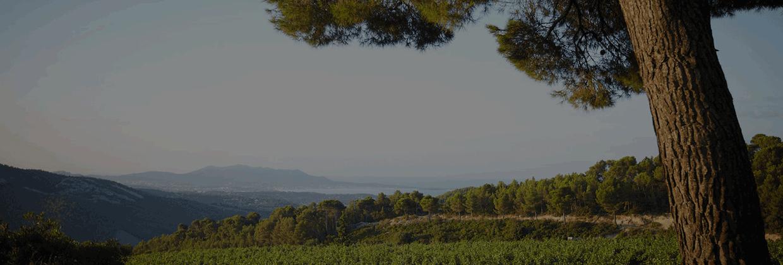 Provence & Corse