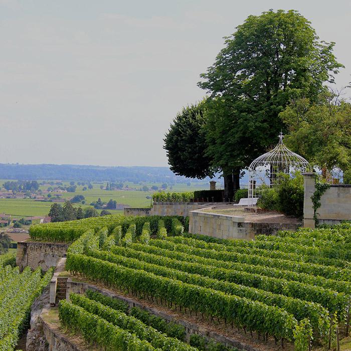 Les vignes du Château Ausone